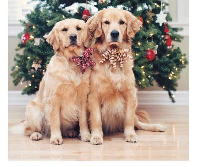 Two Dogs Xmas Tree