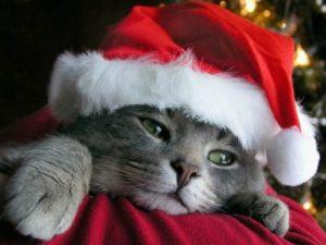 Triste Natal: il fenomeno dell'Holiday Blues