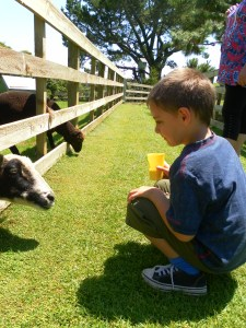 Jayden and the goats