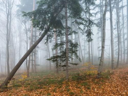 Bukowy las, Gródek ©www.pan-foto.com