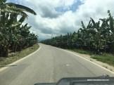 Mitten durch die Bananenplantagen