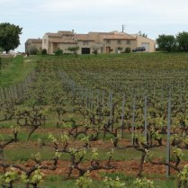 Looking across vineyard to the big house with the gites where we stay