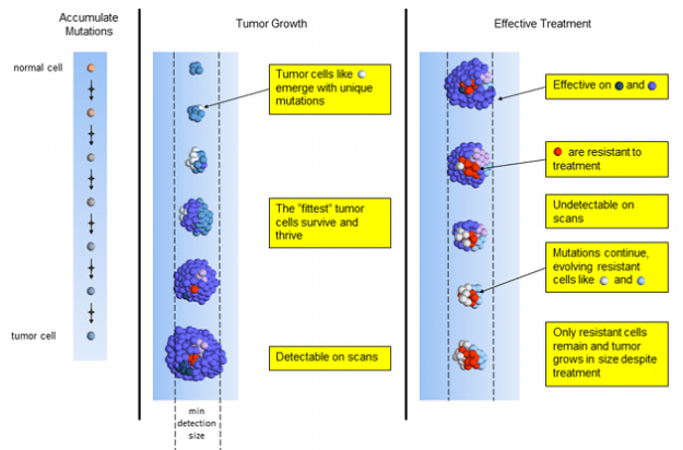 Effective Tumor Treatment