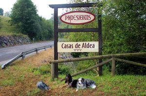 perros en Pandesiertos