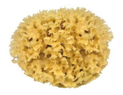 natuurlijke spons – Natuur spons – natuurspons – zeespons – zee spons – natuurlijke sponzen
