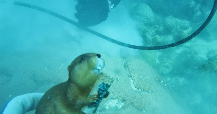 Archibald the Beaver dives with the Cohen Lab | Woods Hole Oceanographic Institute