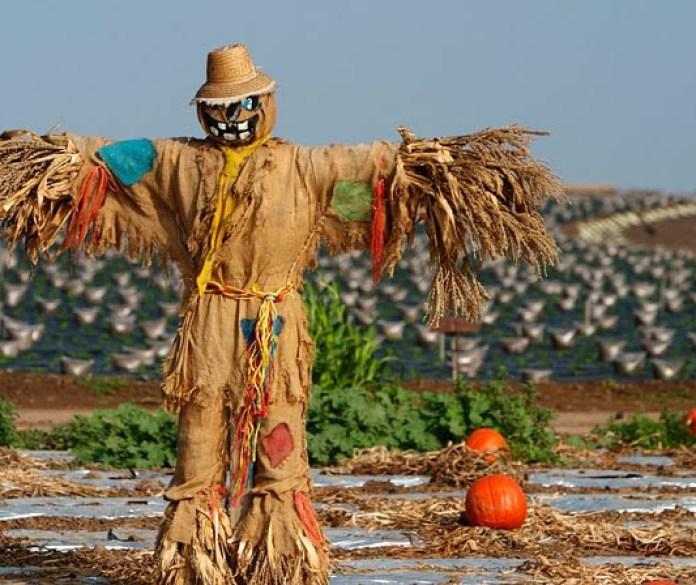 Scarecrow-m