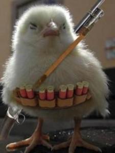 pollo-elite