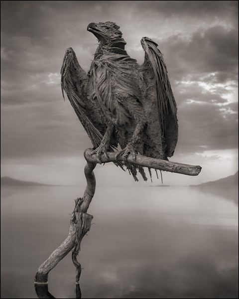 Calcified-Fish-Eagle