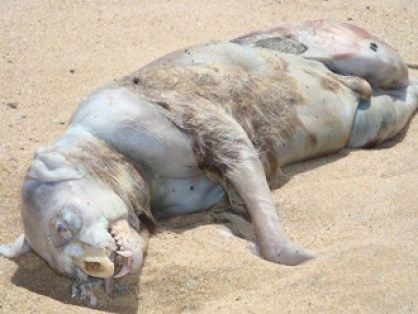 """This photo of the """"Montauk Monster"""" was taken by Christina Pampalone. Photo received on July 31, 2008."""