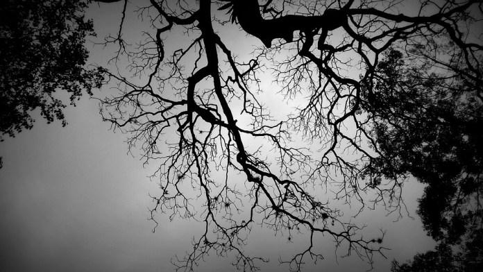 https://pixabay.com/es/shadow-tree-black-and-white-tree-2798488/