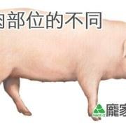 肉粽該選用哪個部位的豬肉?