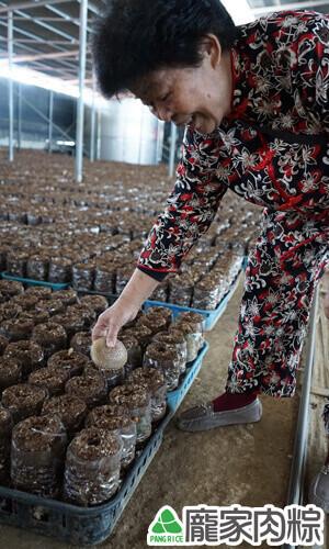 龐奶奶親自採收新鮮的新社冬菇