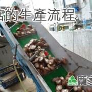 83-00包粽子的乾燥香菇是如何生產的呢?(龐家肉粽食材介紹)