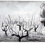 Les Ignorants d'Etienne Davodeau, le Jeudi des livres repart en vignes…