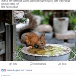 Ställ ut vatten till djur och insekter i trädgården när det är värmebölja