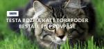 Testa kattfoder gratis