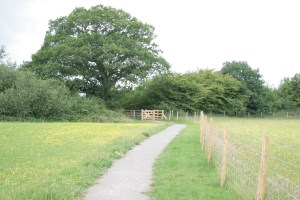 Path towards oak tree
