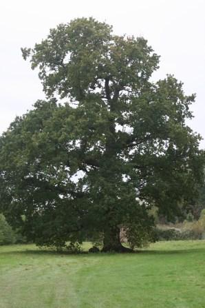 Wise oaks