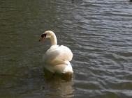 20. Singleton Lake