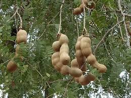 termatic tree