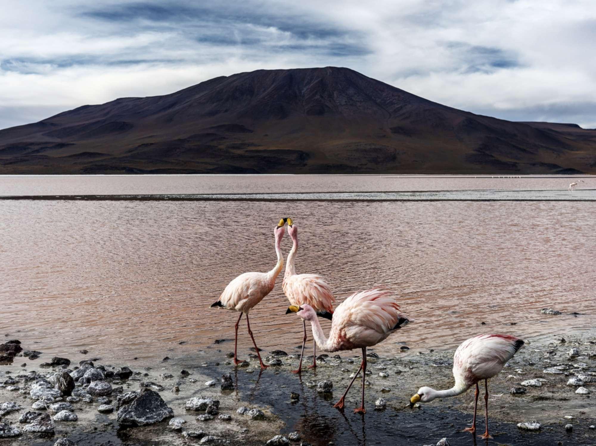 Viaggio di nozze in Bolivia, Laguna Colorada