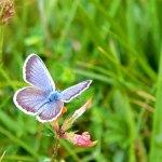 Mariposa en Picos de Europa