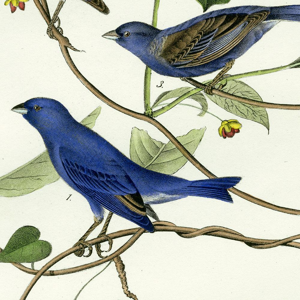 Résultat d'images pour audubon birds of america