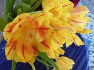 Kevätmatkat 2014 001