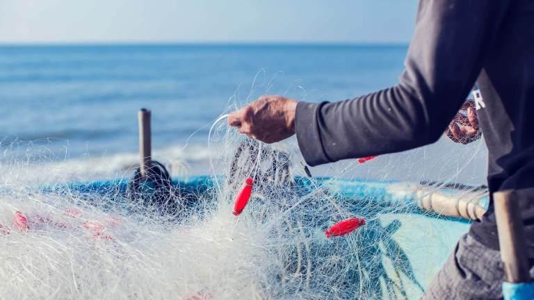 Competitività del settore ittico