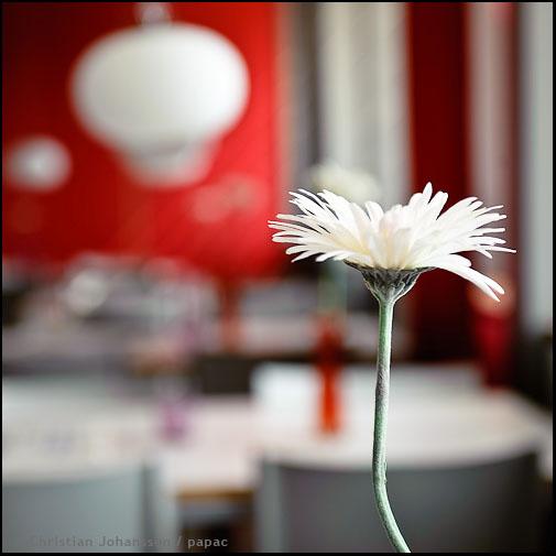 vit blomma till phs
