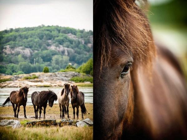 Hästar Sundsby kile, Tjörn