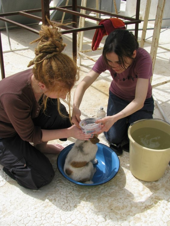 Johanna, Judith e Sandra