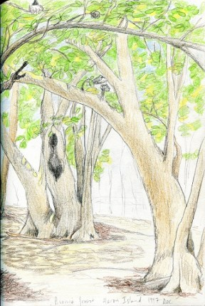 Pisonia forest small