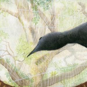 Lyrebird in rainforest, mixed media.