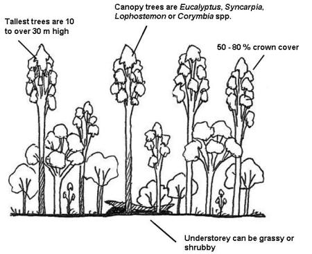 Wet sclerophyll forest structure