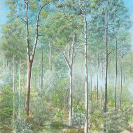 Dry sclerophyll forest - spotted gums (pastel)