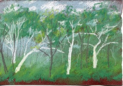 Scribbly gum preliminary sketch_small