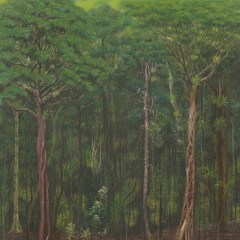 Wet rainforest, south east Queensland – Greeting card