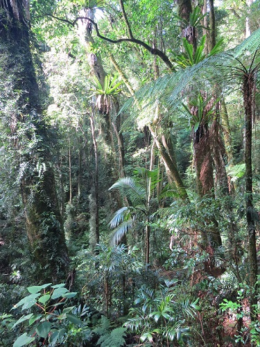 wet subtropical rainforest