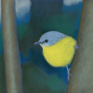 A yellow robin lights up the gloom