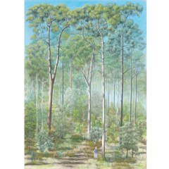 Spotted gum-ironbark forest card