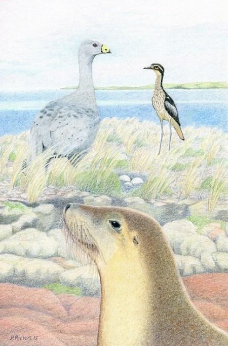 Bush stone curlew and friends_small