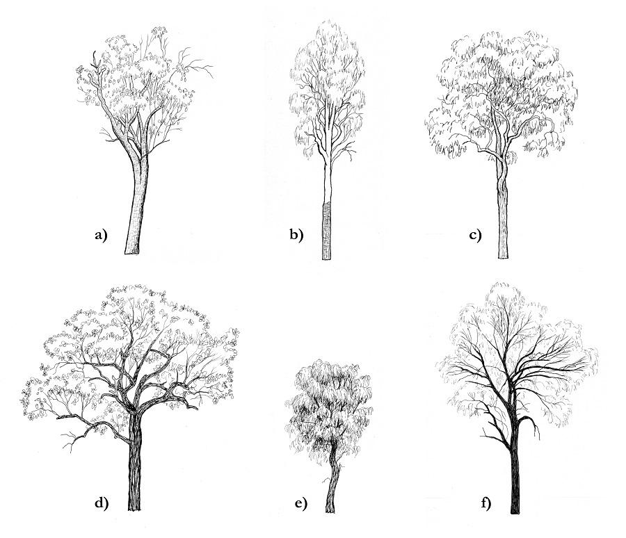 tree quiz