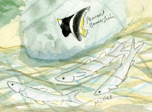 Bannerfish and mullet