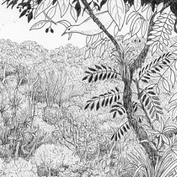 Drawing on Queensland's present to recreate New Zealand's past