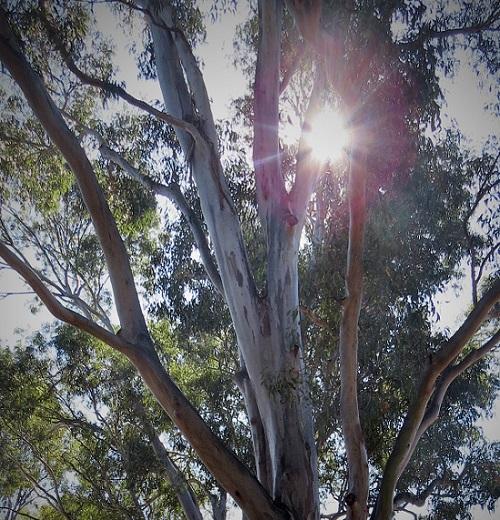 The Selfish Tree