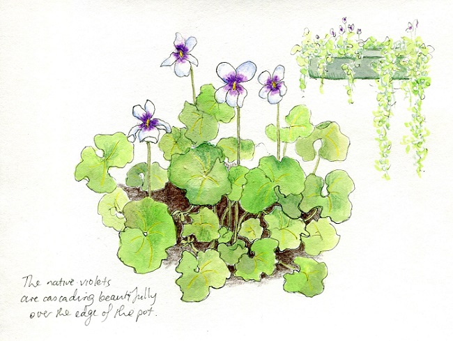 Nature Journaling for Gardeners
