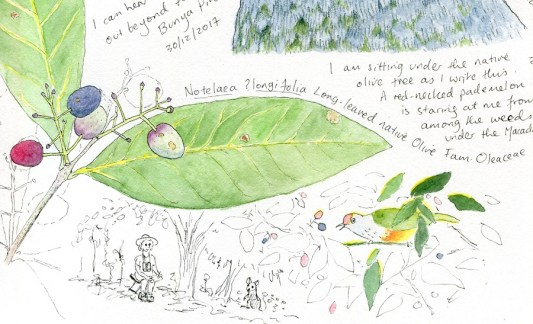 New nature journaling workshops for 2018, plus a personal invite to ...