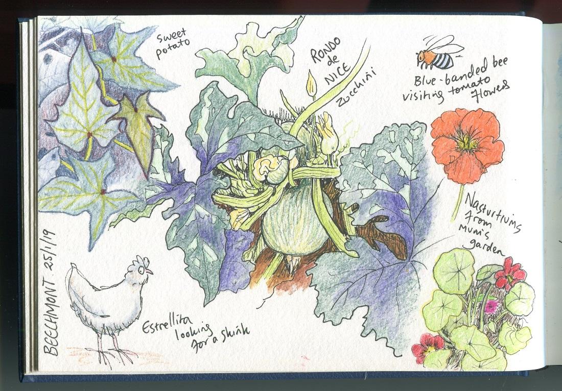 Garden zucchini Jan 2019002small